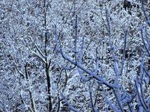Filiais de árvore cobertas com a neve imagem de stock royalty free