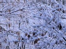 Filiais de árvore cobertas com a neve fotografia de stock