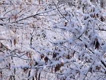 Filiais de árvore cobertas com a neve imagens de stock