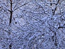 Filiais de árvore cobertas com a neve fotos de stock royalty free