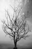 Filiais de árvore com as folhas com nebuloso Fotos de Stock Royalty Free