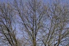 Filiais de árvore com as folhas com nebuloso Imagens de Stock Royalty Free