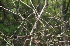 Filiais de árvore com as folhas com nebuloso Foto de Stock Royalty Free