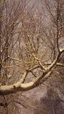 Filiais de árvore com as folhas com nebuloso Imagem de Stock Royalty Free