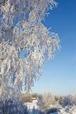 Filiais de árvore com geada Imagem de Stock