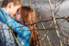 Filiais de árvore com ser folhas demitidas Imagem de Stock