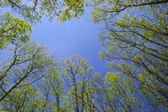 Filiais de árvore de encontro ao céu azul foto de stock royalty free
