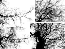 Filiais de árvore do vetor Imagens de Stock