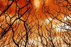 Filiais de árvore estéreis sinistras Imagens de Stock Royalty Free