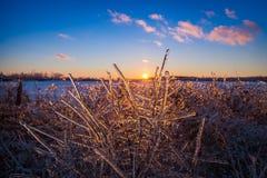 Filiais de árvore geladas Imagem de Stock