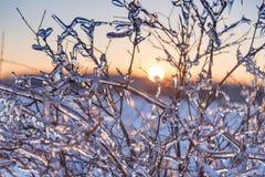 Filiais de árvore geladas Fotografia de Stock