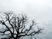Filiais de árvore mostradas em silhueta Fotos de Stock Royalty Free
