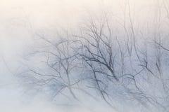 Filiais de árvore na névoa Imagens de Stock