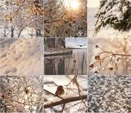 Filiais de árvore Snow-covered Pisco de peito vermelho na neve no inverno Paisagens do inverno com neve Paisagem bonita do invern Fotos de Stock Royalty Free