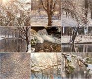 Filiais de árvore Snow-covered Pisco de peito vermelho na neve no inverno Paisagens do inverno com neve Paisagem bonita do invern Fotografia de Stock Royalty Free