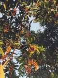 Filiais de uma árvore fotos de stock royalty free