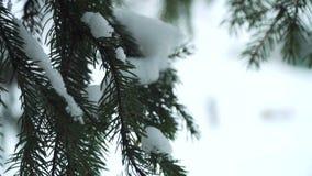 Filiais do abeto cobertas com a neve vídeos de arquivo
