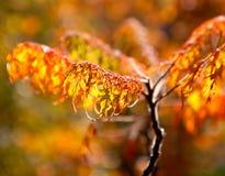 Filiais do outono na luz solar Fotografia de Stock Royalty Free