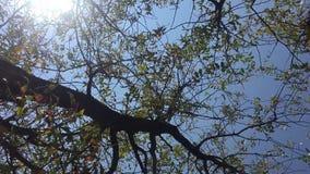 Filiais e céu de árvore video estoque