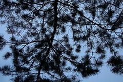 Filiais e céu de árvore imagem de stock