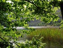 Filiais, folhas, lingüeta, lago Fotos de Stock Royalty Free