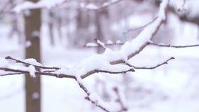 Filiais na neve vídeos de arquivo