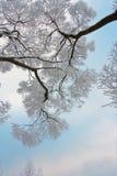 Filiais Snow-covered da árvore no fundo do céu Foto de Stock Royalty Free