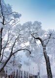 Filiais Snow-covered da árvore no fundo do céu Imagens de Stock