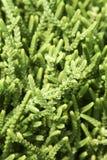 Filiais verdes Foto de Stock