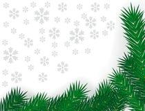Filiais verdes do abeto Imagem de Stock Royalty Free