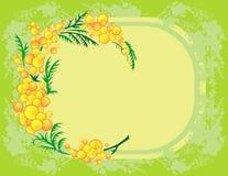 Filial abstrata do mimosa com fundo Fotografia de Stock Royalty Free