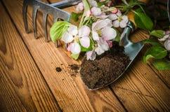 Filial av att blomstra äpplet och trädgårds- hjälpmedel på en träyttersida, Arkivfoto