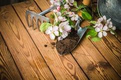 Filial av att blomstra äpplet och trädgårds- hjälpmedel på en träyttersida, Royaltyfria Bilder