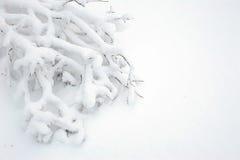 Filial av björken i snön Arkivfoto