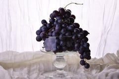 Filial av blåa druvor i den glass vasen Fotografering för Bildbyråer
