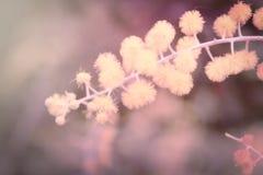 Filial av blomman i mjuk stil Arkivfoton