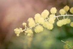 Filial av blomman i mjuk stil Royaltyfri Fotografi