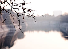 Filial av Cherry Cherry Blossom med sjön Royaltyfria Foton