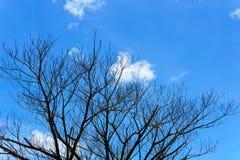 Filial av det döda trädet med härlig blå himmel och molnet Arkivbild