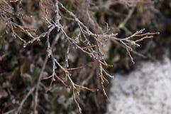 Filial av det nakna trädet Royaltyfria Bilder