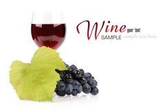 Filial av druvor och exponeringsglas av wine Arkivbild