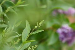 Filial av en buske på en suddig bakgrund royaltyfria foton