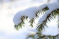 Filial av en gran med is och snö arkivbilder