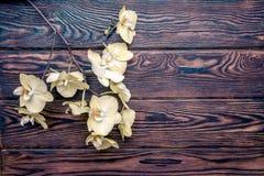 Filial av en gul orkidé Royaltyfria Foton