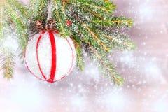 Filial av en julgran som dekoreras med sn?, en vit boll med r?da band och kottar Kopiera utrymme f?r text arkivbild