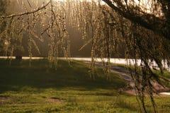 Filial av en lärk i naturen nära sjön i ett solsken royaltyfri bild
