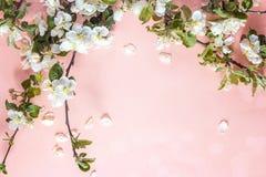 Filial av ett blomstra äppleträd på en rosa bakgrund Ställe fo royaltyfri bild