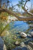 Filial av ett gammalt träd över The Creek Arkivbild
