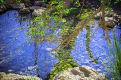Filial av ett gammalt träd över The Creek Royaltyfria Bilder