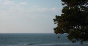 Filial av ett granträd med suddigt krickavatten i bakgrunden stock video